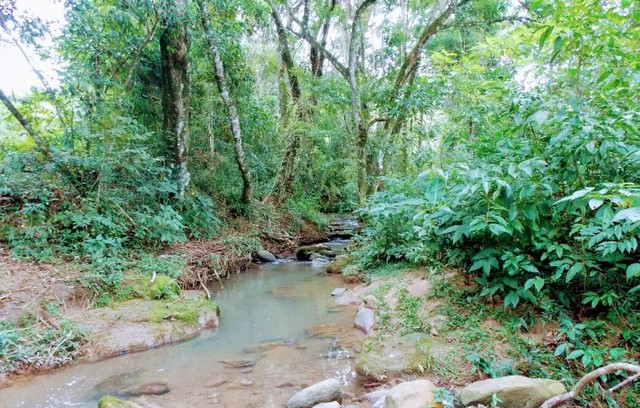 Vende-se belíssima chácara a 14 Km do centro de Cândido de Abreu-PR - Foto 19