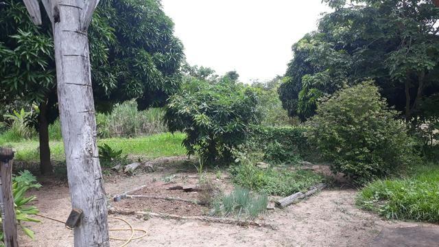 Vendo Fazenda Porteira fechada 80 hectares/DOCUMENTADA - Foto 10