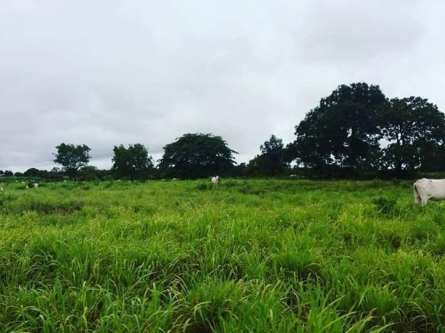 Fazenda em Livramento há 44 km Cuiabá com piscina, muito pasto, represas e lago - Foto 3