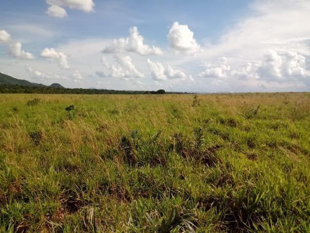 Fazenda em Rosário Oeste com 784 Hectares - Foto 5