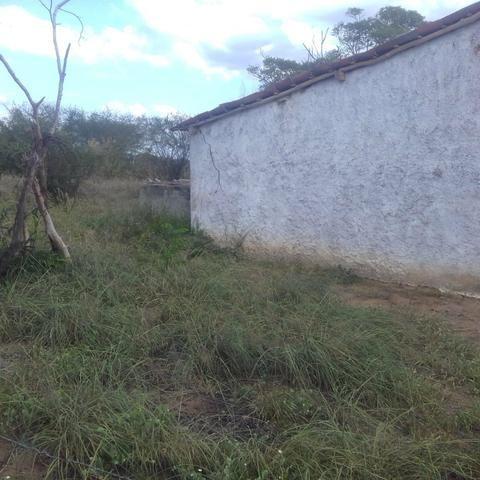 Fazenda em Itaberaba, 78 tarefas, 344 mil metros2 - Foto 6