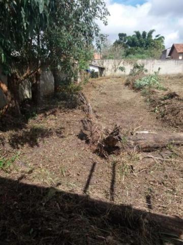 Terreno para venda em quatro barras, jardim das acácias, 2 dormitórios, 1 banheiro - Foto 6