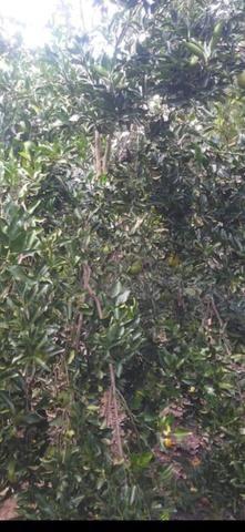 Sítio 9 Hectares 85km de Cuiabá