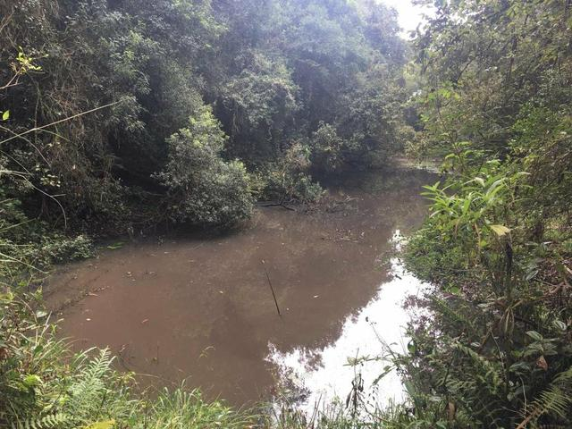 Terreno em são José dos Pinhais - Foto 2