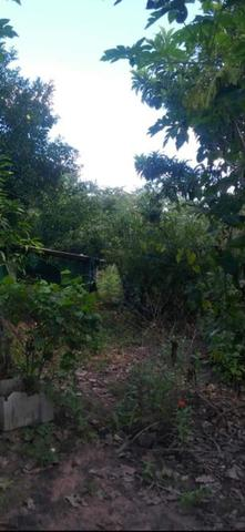 Sítio 9 Hectares 85km de Cuiabá - Foto 3