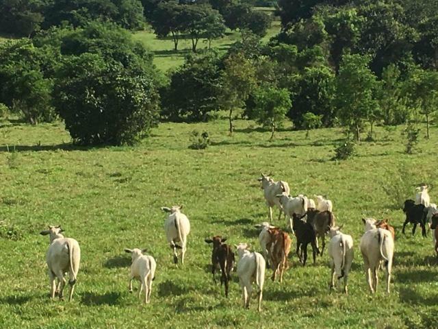 Fazenda Cesarina - Foto 9