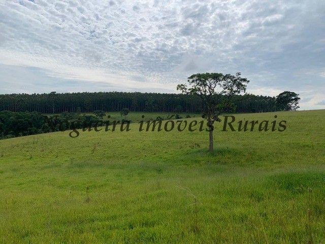 Fazenda com 59 alqueires para pecuária (Nogueira Imóveis Rurais) - Foto 10