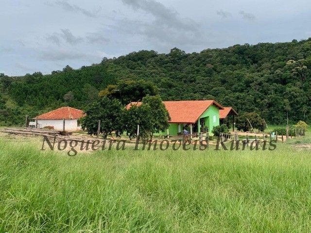 Fazenda com 59 alqueires para pecuária (Nogueira Imóveis Rurais) - Foto 15