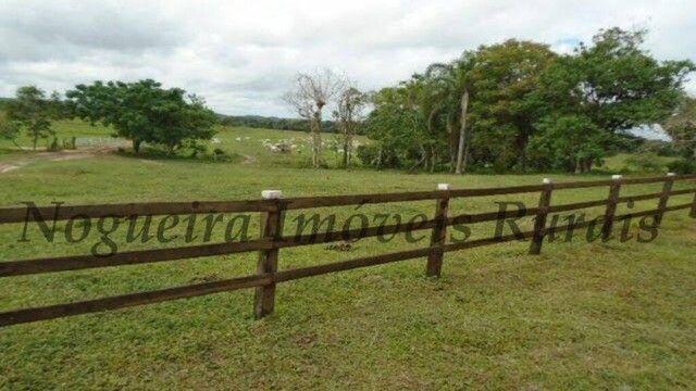 Fazenda com 450 alqueires em Juquiá, oportunidade para pecuária (Nogueira Imóveis Rurais) - Foto 12