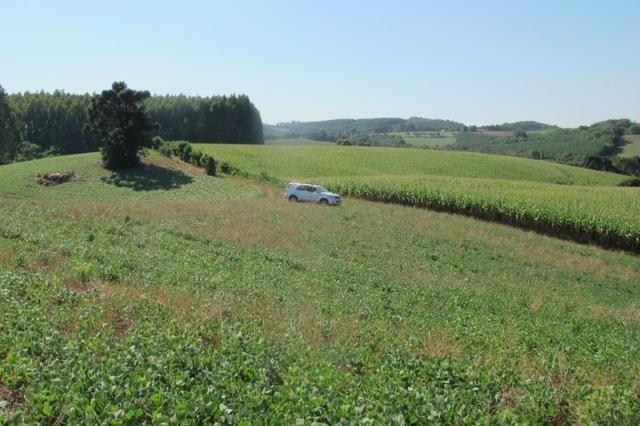 Área imperdível R$100.000,00 o alq. de planta/R$50.000,00 bosque e rio - Foto 8
