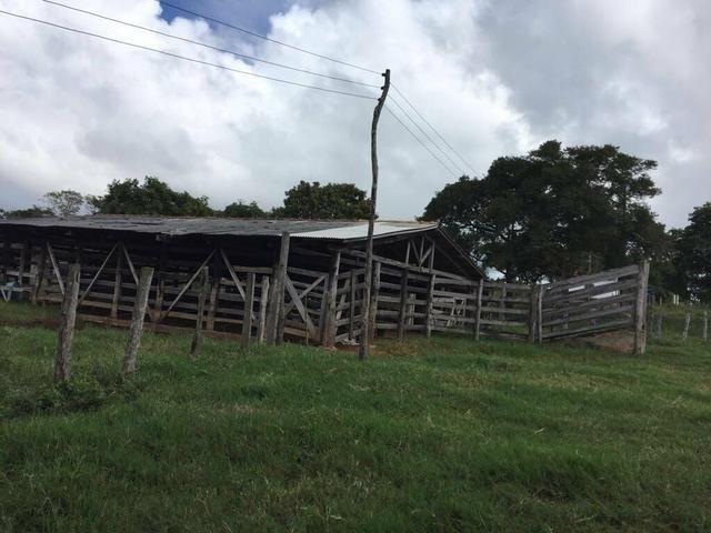 Vendo Fazenda Porteira fechada 80 hectares/DOCUMENTADA - Foto 16