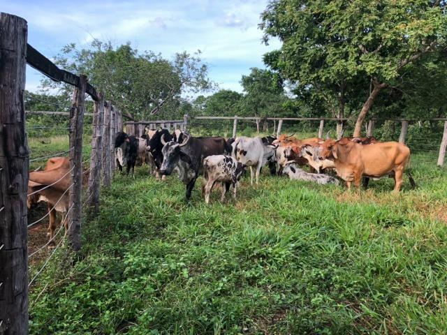 Vendo Fazenda Porteira fechada 80 hectares/DOCUMENTADA - Foto 17