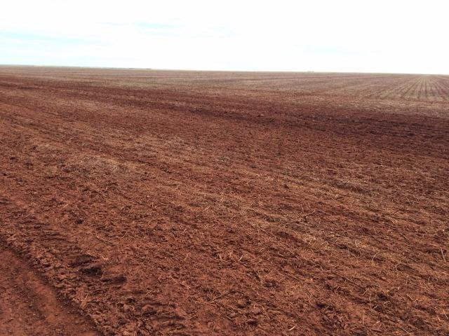 1900 Hectares, 1800 hectares lavoura, lavoura soja e algodão, Diamantino ?MT - Foto 3