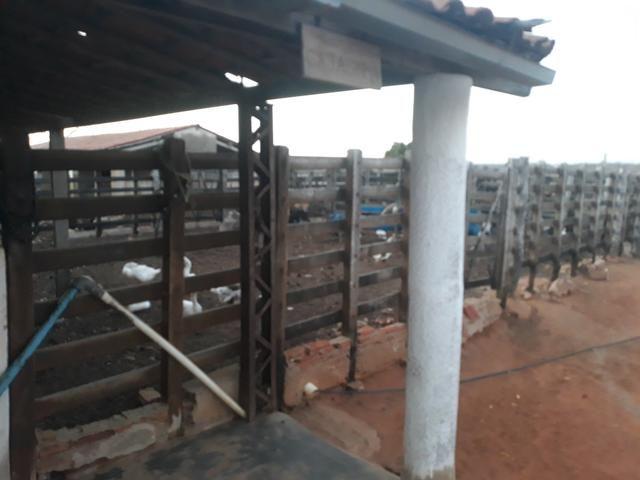 Fazenda Cajazinha * FACILIDADE PARA COMPRAR - Foto 3