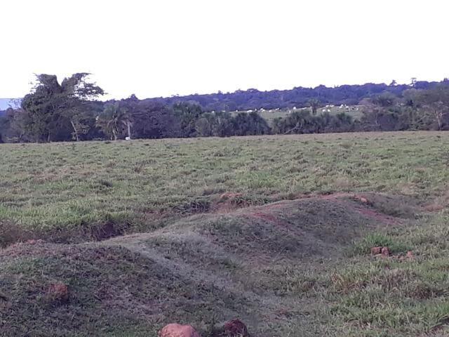 Fazenda em Arenapolis Mato Grasso Terra de Cultura - Foto 12