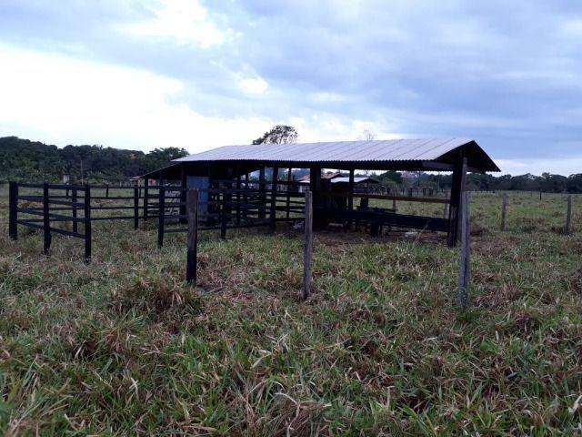 3.82 hectares a 12 km de Castanhal por 220 mil reais Documentada - Foto 8