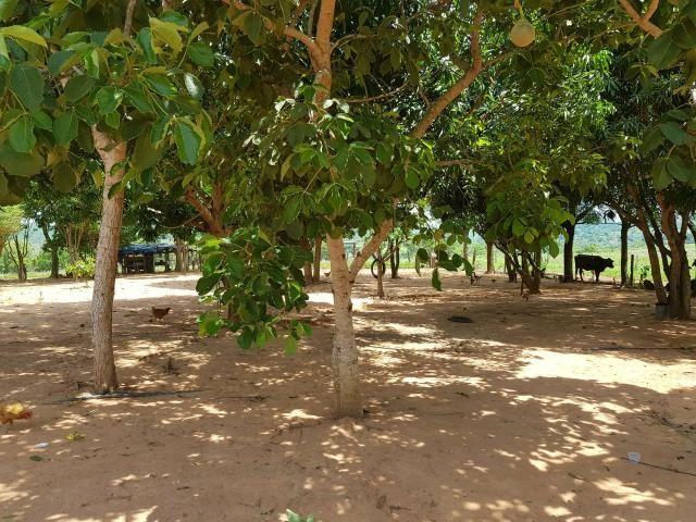 Vendo chácara no dom Aquino - Foto 4