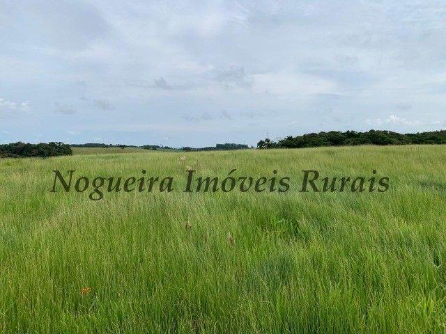 Fazenda com 59 alqueires para pecuária (Nogueira Imóveis Rurais) - Foto 2