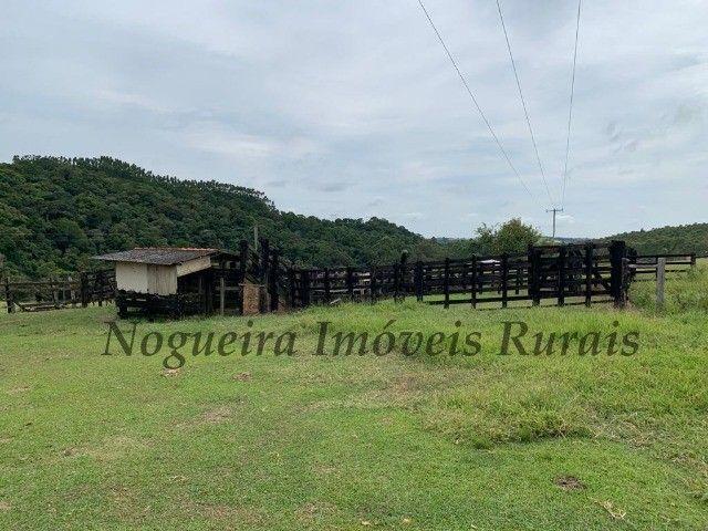 Fazenda com 59 alqueires para pecuária (Nogueira Imóveis Rurais) - Foto 19