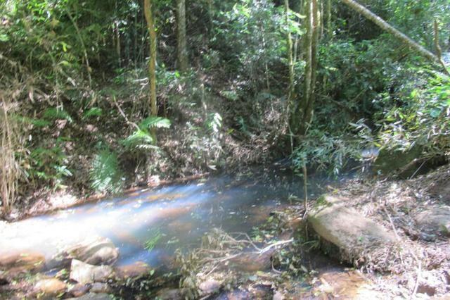 Área imperdível R$100.000,00 o alq. de planta/R$50.000,00 bosque e rio - Foto 4