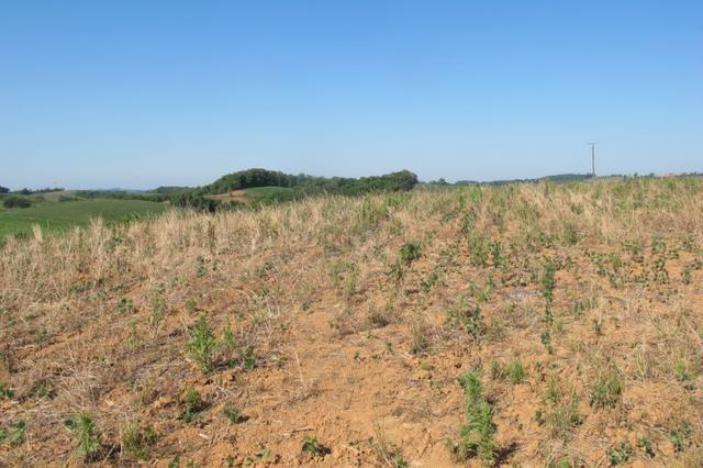 Área imperdível R$100.000,00 o alq. de planta/R$50.000,00 bosque e rio - Foto 12