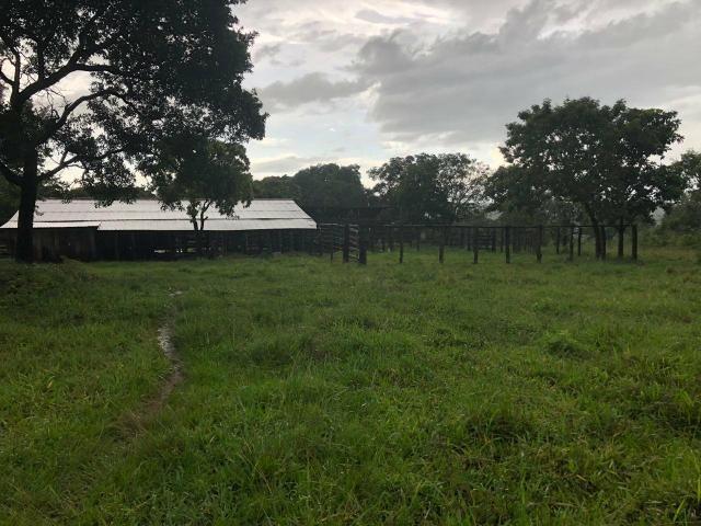 Vendo Fazenda Porteira fechada 80 hectares/DOCUMENTADA - Foto 6
