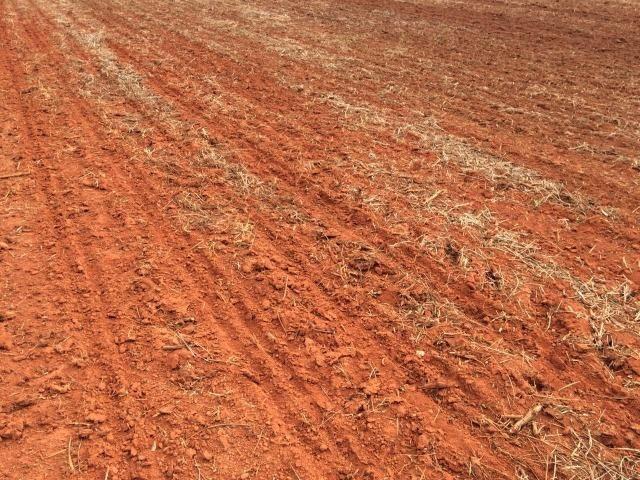 1900 Hectares, 1800 hectares lavoura, lavoura soja e algodão, Diamantino ?MT - Foto 7