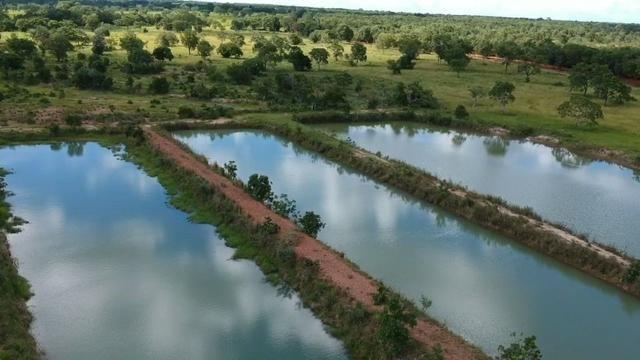 Fazenda em Livramento há 44 km Cuiabá com piscina, muito pasto, represas e lago - Foto 2