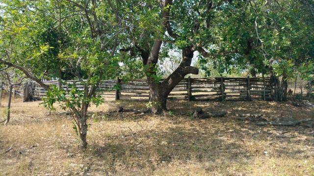 Fazenda em José de Freitas-PI - Foto 16
