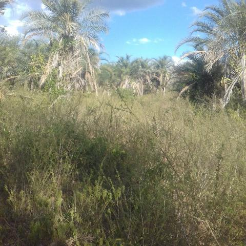 Fazenda em Itaberaba, 78 tarefas, 344 mil metros2 - Foto 8