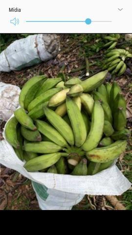 Banana prata - Foto 3