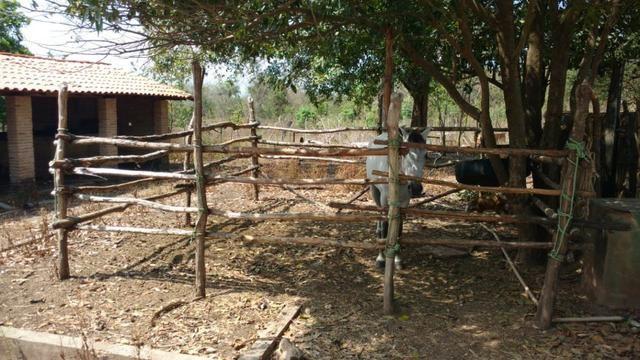 Fazenda em José de Freitas-PI - Foto 14