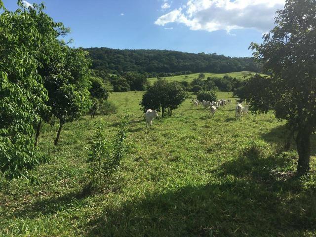 Fazenda Cesarina - Foto 3