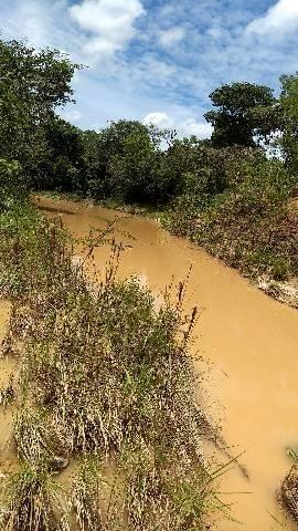 Sítio 10 ectares com água corrente - Foto 6