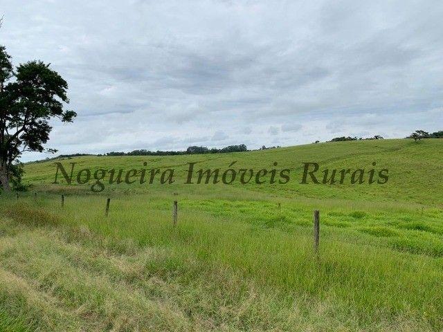 Fazenda com 59 alqueires para pecuária (Nogueira Imóveis Rurais) - Foto 5