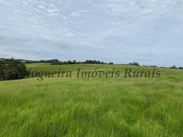 Fazenda com 59 alqueires para pecuária (Nogueira Imóveis Rurais) - Foto 8