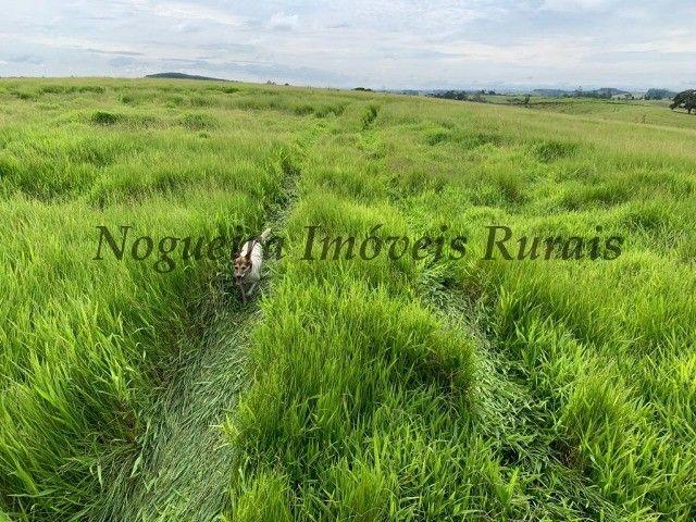 Fazenda com 59 alqueires para pecuária (Nogueira Imóveis Rurais) - Foto 18