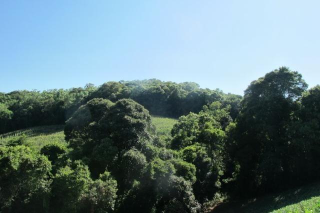 Área imperdível R$100.000,00 o alq. de planta/R$50.000,00 bosque e rio - Foto 3