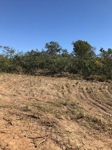 Vendo Fazenda Porteira fechada 80 hectares/DOCUMENTADA - Foto 2