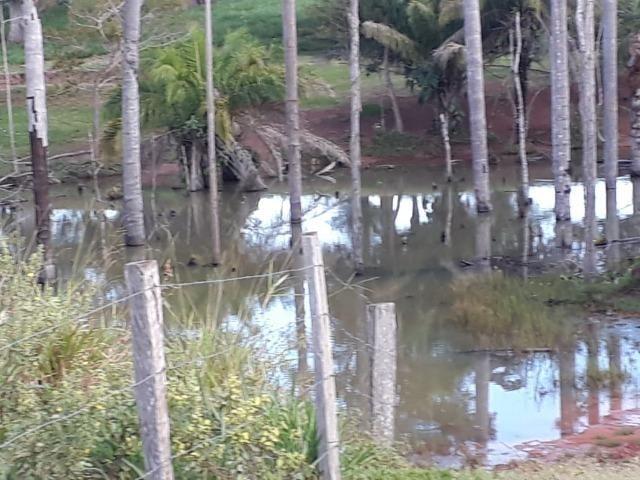 Fazenda em Arenapolis Mato Grasso Terra de Cultura - Foto 9