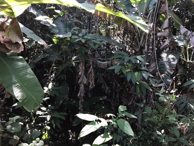 Chácaras com Córrego em Caldas Novas - Foto 11