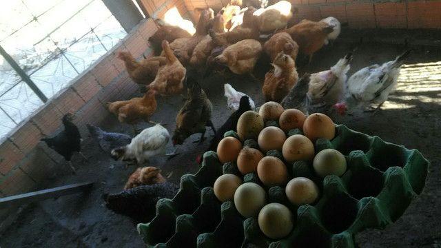 Ovos caipiras para consumo - Foto 2
