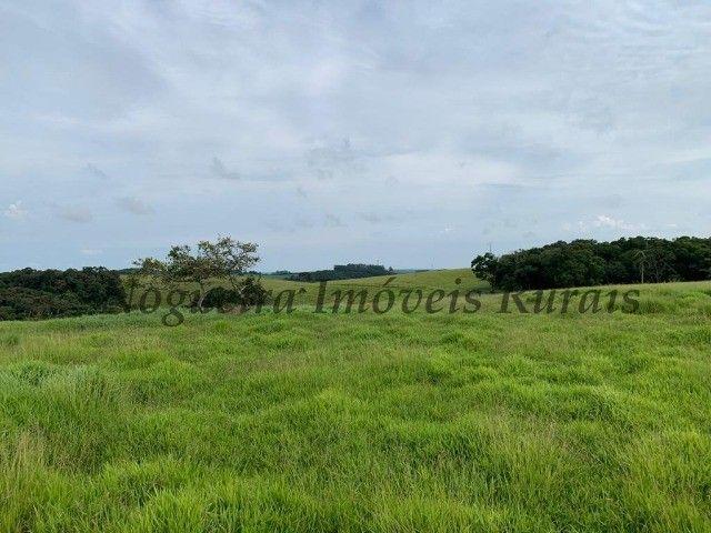 Fazenda com 59 alqueires para pecuária (Nogueira Imóveis Rurais) - Foto 11