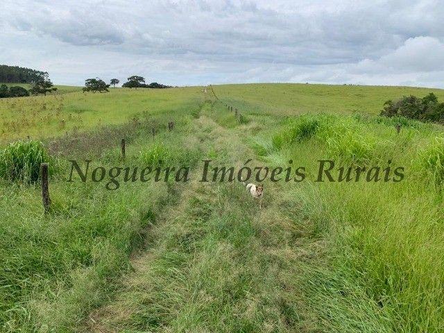 Fazenda com 59 alqueires para pecuária (Nogueira Imóveis Rurais) - Foto 13
