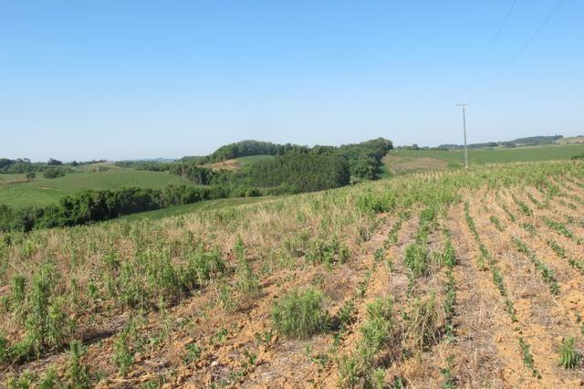 Área imperdível R$100.000,00 o alq. de planta/R$50.000,00 bosque e rio - Foto 11