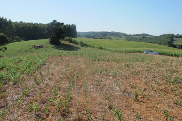 Área imperdível R$100.000,00 o alq. de planta/R$50.000,00 bosque e rio - Foto 13