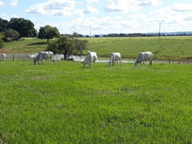 Fazenda em Arenapolis Mato Grasso Terra de Cultura