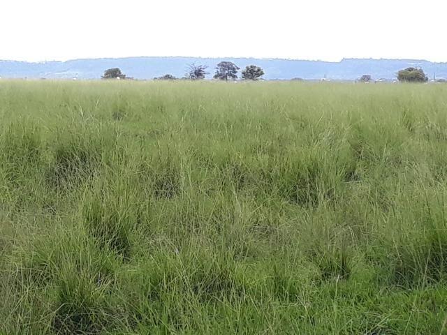 Fazenda em Arenapolis Mato Grasso Terra de Cultura - Foto 13
