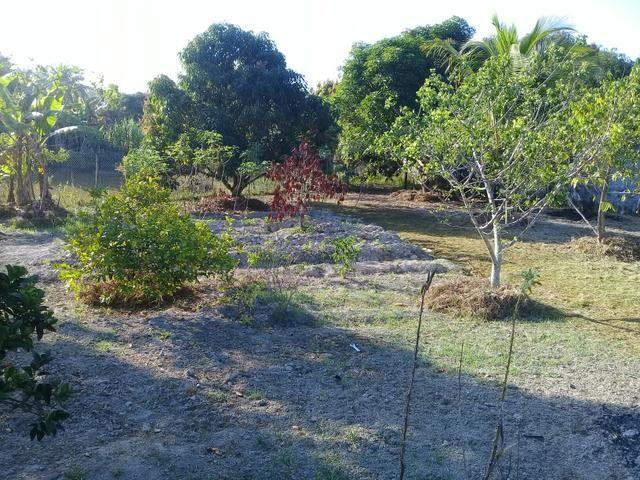 Fazenda São Jorge - Foto 8