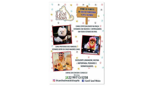 Bibelôs / Lulu da Pomerânia / Spitz Alemão